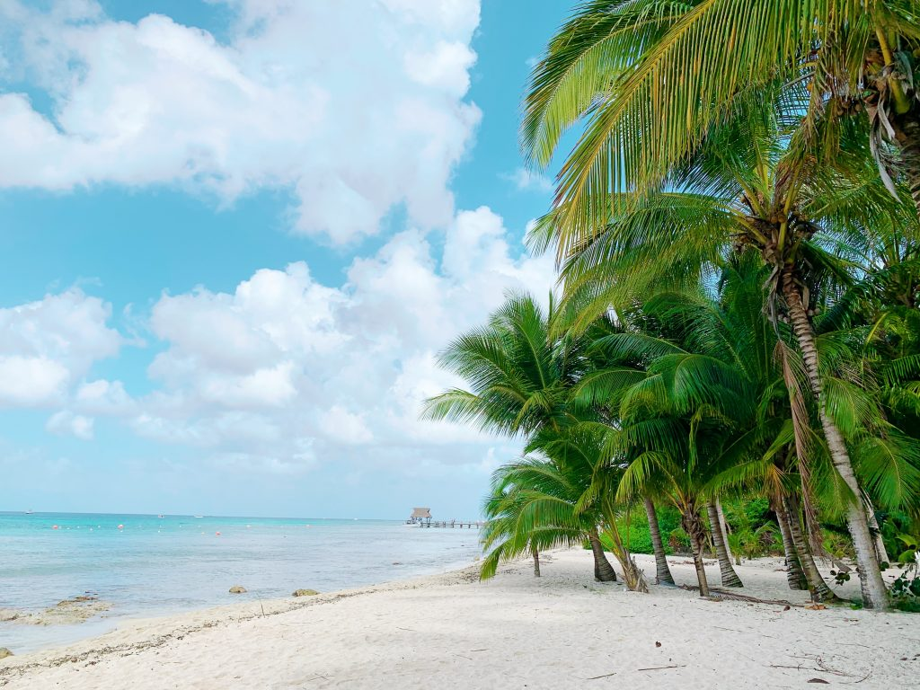 plage de sable fin bordée de palmiers