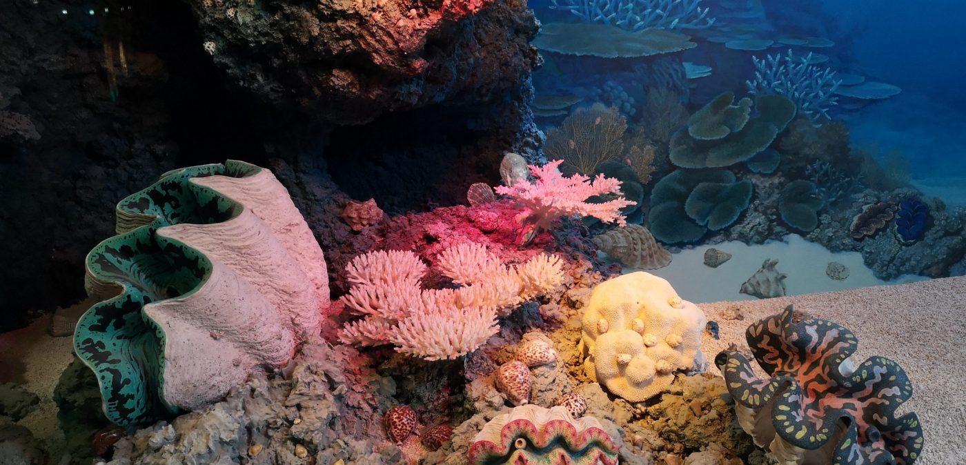 Plongée Merveilles