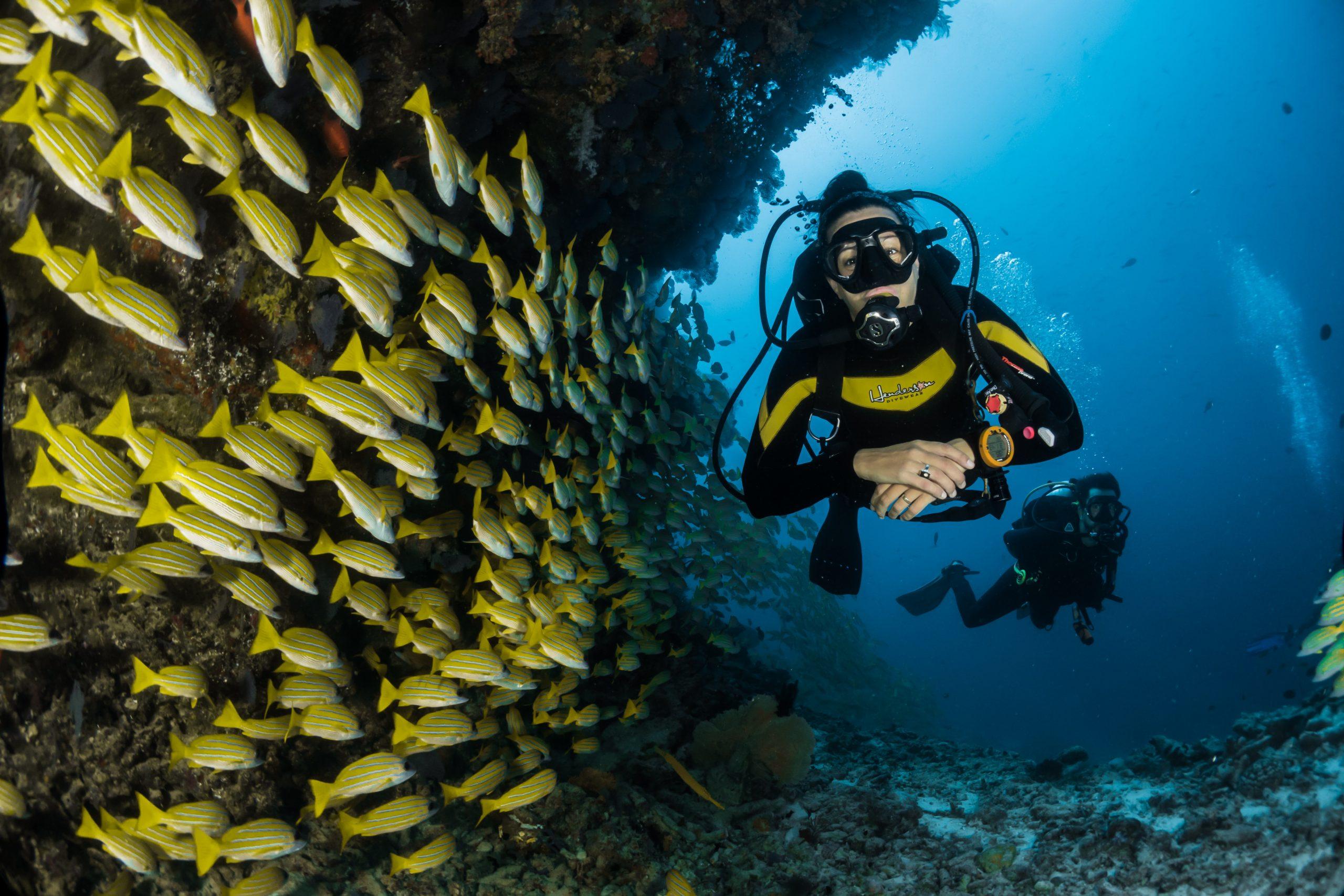 deux hommes faisant de la plongée sous marine devant un banc de poissons
